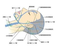 静脈ヘッドスパ